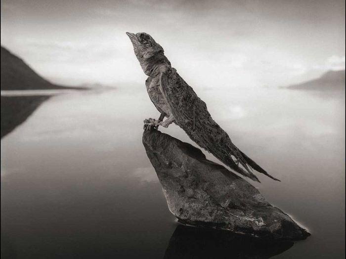 Смертельная красота озера Натрон: зловещее место, где животные превращаются в истуканы (ФОТО)