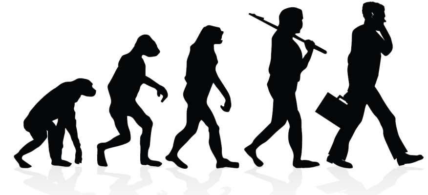 human evolution walking tall