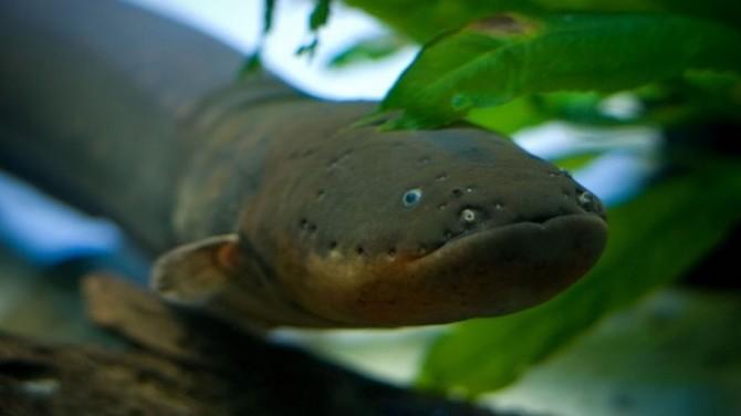 Вокруг света: 10 зловещих обитателей Амазонки (ФОТО)