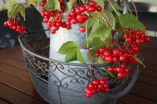 Домашняя аптека: 8 наиболее полезных осенних ягод