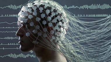 Ученые расшифровали генную программу мозга