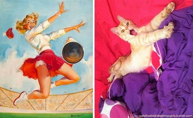 15 кошек, позирующих как фотомодели (ФОТО)