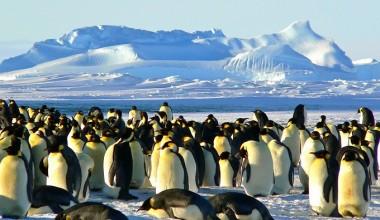 Ученые считают, что Арктика и Европа поменялись климатом