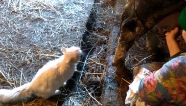 Сеть умилил кот, который пьет молоко прямо на лету (ВИДЕО)
