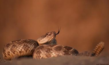 Мужчину укусила отрезанная голова змеи