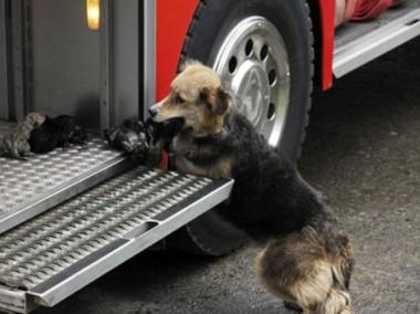 Собака, проголодавшись, подожгла дом хозяев