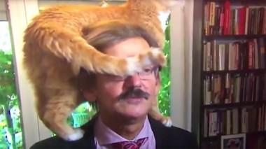 Рыжий кот стал звездой интервью с историком (ВИДЕО)