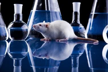 Новый спрей от гриппа испытали на мышах
