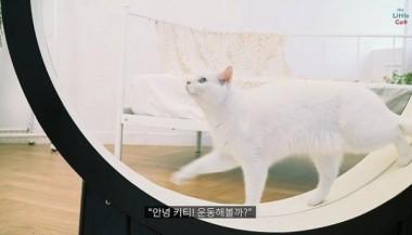 Ученые из Кореи придумали «умную» беговую дорожку для кошек (ФОТО)