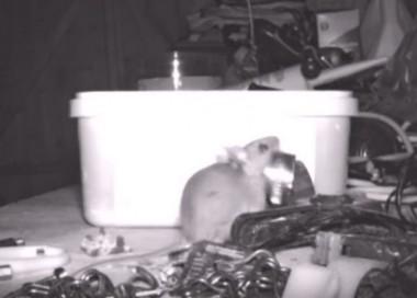 Мышь каждую ночь наводила порядок в гараже фермера (ВИДЕО)