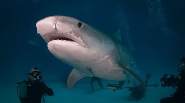 Акулы оказались близки к исчезновению