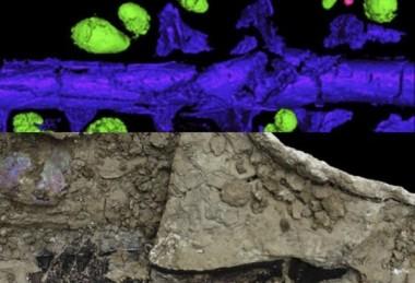 Археологи нашли рыбу, размазанную метеоритом