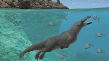 Останки древнего четвероногого кита обнаружились в Перу
