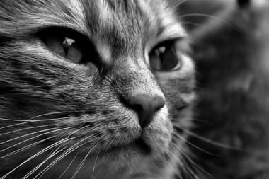 Ученые выяснили, почему кошки отзываются на свою кличку