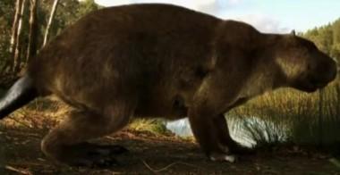 10 тысяч лет назад в Америке жили гигантские бобры ростом с человека