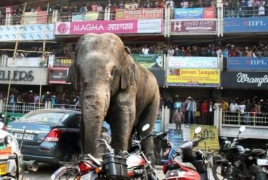 В Индии слоны разгромили парковку автомобилей (ВИДЕО)