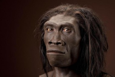 Останки древнего человека возрастом 1,8 млн лет нашли в Индонезии