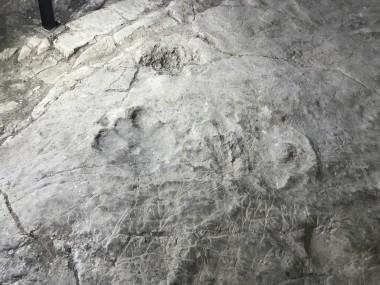 Найден самый древний след человека в Европе