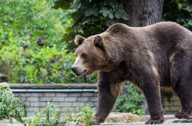 Журавль испугал медведя и обратил его в бегство (ВИДЕО)