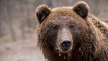 Медведь стал виновником возгорания в полицейской машине