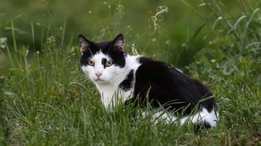 Названы причины любви кошек к траве