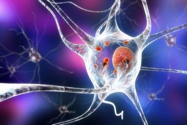 Клетками мозга научились управлять с помощью смартфона