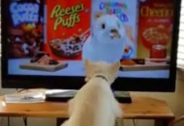 Пес бурно реагирует, увидев кролика на экране телевизора (ВИДЕО)