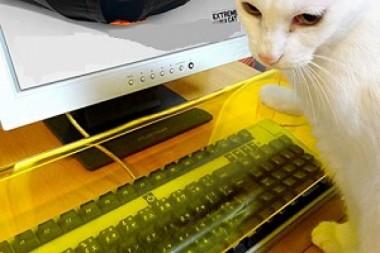 Американцы придумали специальную клавиатуру для кошек
