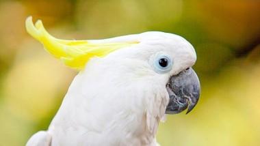 Попугай показал, как правильно играть в боулинг (ВИДЕО)