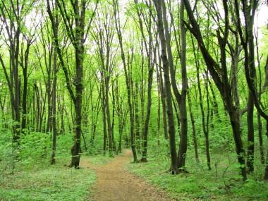В Голосеевском лесу снимут фильм