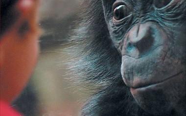 Решётка не помешала обезьяне привести в порядок собаку (ВИДЕО)