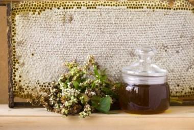 Настоящие свойства гречишного мёда раскрыл эксперт