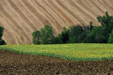 Правительство запустило сайт о земельной реформе в Украине