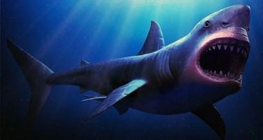 В США нашли скелет акулы-современницы динозавров