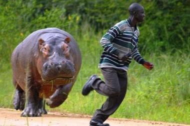 Названы самые смертоносные существа на планете