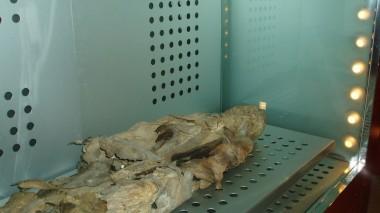 Инфракрасная камера выявила невидимые тату на мумиях Древнего Египта