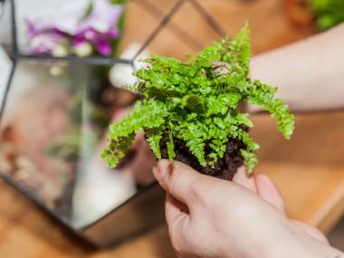 Растения оказались способны говорить