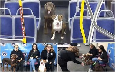 Рождественское чудо: водитель помогла двум псам вернуться в семью (ВИДЕО)