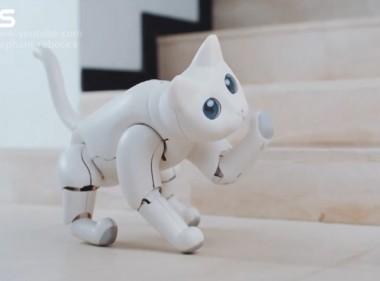В США создали робокота