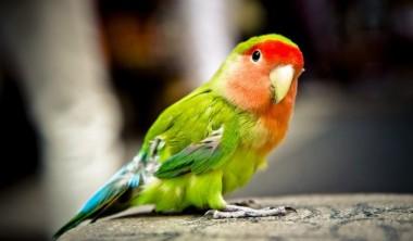Женщина обратилась в полицию из-за криков попугая о помощи (ВИДЕО)