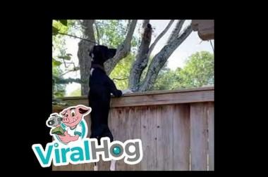 В сети смеются над собакой, которая пытается добраться к белке (ВИДЕО)