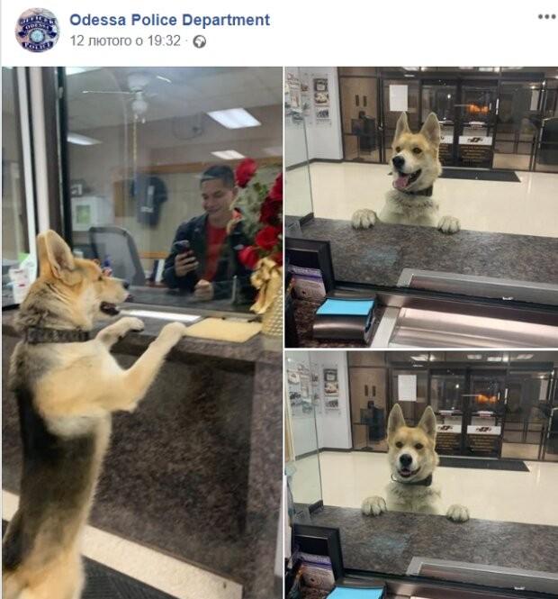 В США пес сообщил полицейским, что потерялся