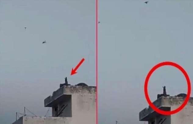 В Индии обезьяна запустила воздушного змея с крыши городского дома (ВИДЕО)
