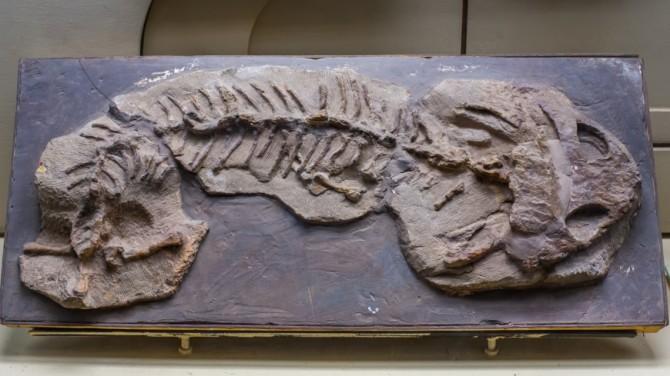 В Канаде найдены останки древней рыбы с пальцами
