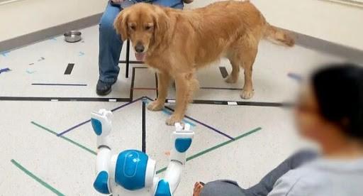 Американские ученые изучили реакцию собак на команды человекоподобного робота