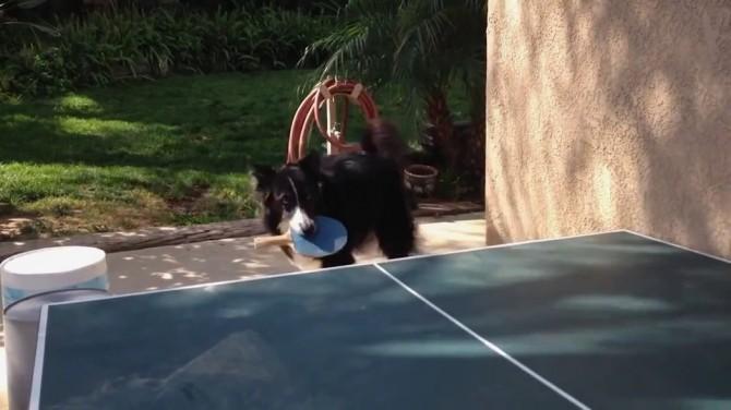 В США собака сыграла в теннис со своим хозяином (ВИДЕО)