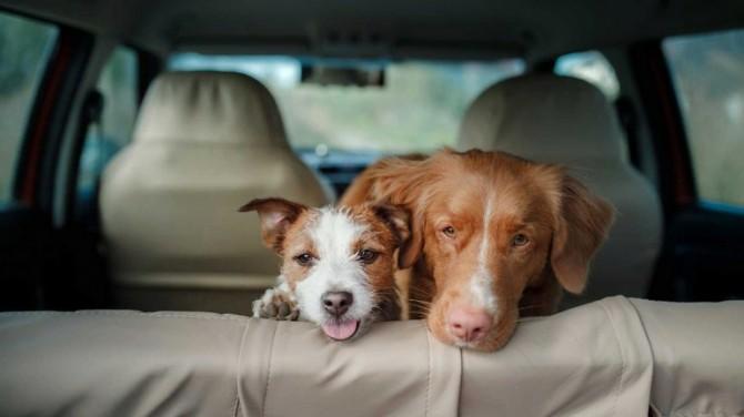 Собаки заставляют людей водить машину осторожнее