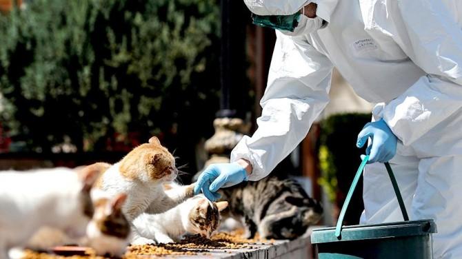 Ученые: кошки могут заражать друг друга коронавирусом