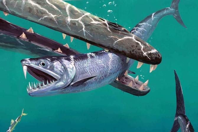 В Бельгии и Пакистане нашли останки древних саблезубых рыб