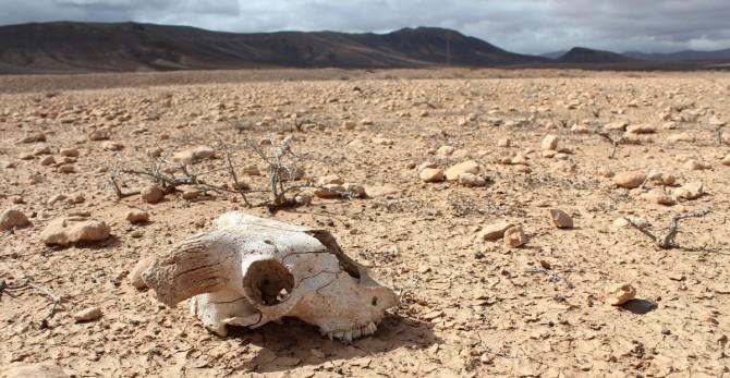 Экологи предупредили о возможности массового вымирания животных